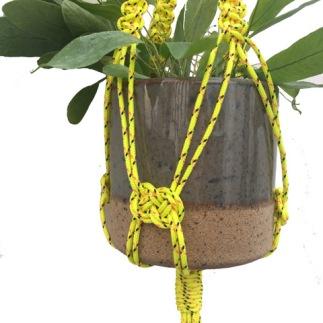 yellowdetail1